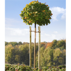 Mr.Gardener Baumpfahl